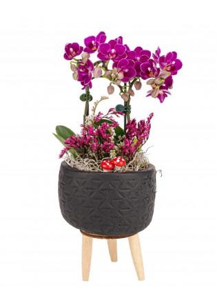 3 Ayaklı Saksıda Mini Orkide