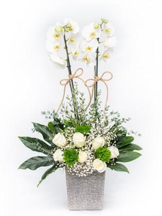 Beyaz Orkide Gül Aranjmanı