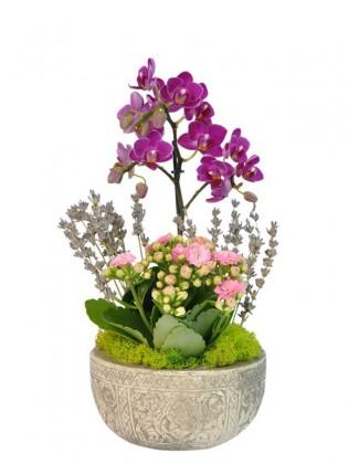 Orkide Kalanchoe Tasarımı
