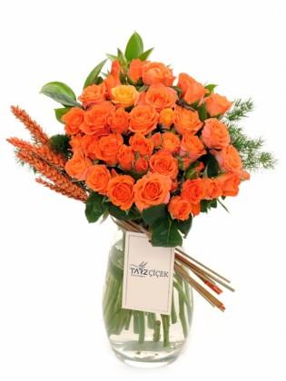 Orange Arbor Rose