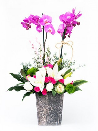 2 Dal Mor Orkide Güller