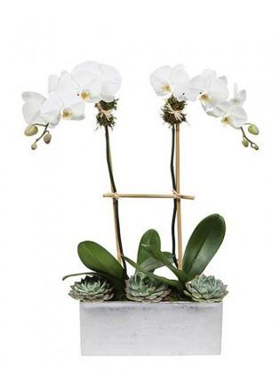 2 Dal Orkide ve Succulentler