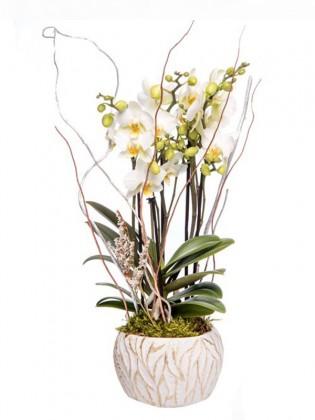 Beyaz Orkide Tasarımı