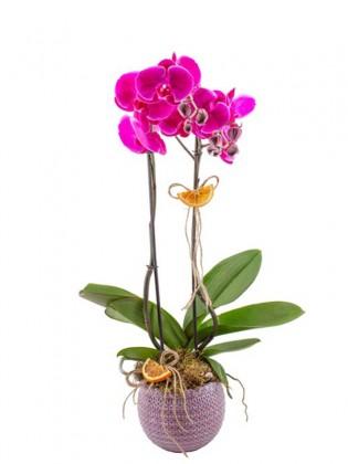 Fuşya Orkide Tasarımı