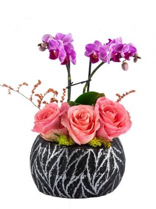 Güller ve Mini Orkide