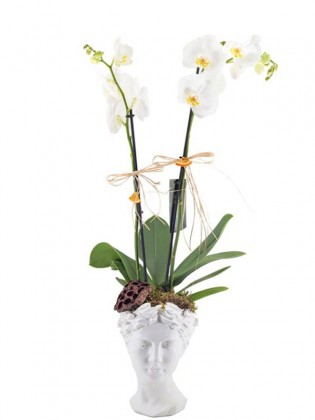 Helen Beyaz Orkide
