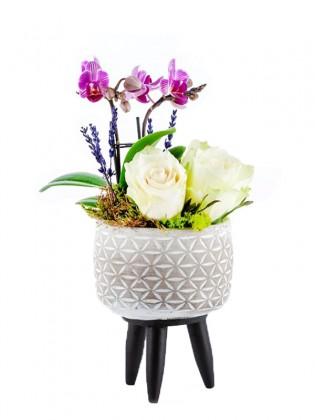 Mini Orkide ve Beyaz Güller