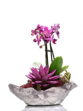 Orkide ve Sukulent Bahçesi