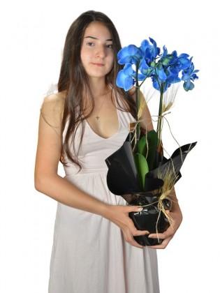 Fresh Blue Orkide